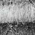 Ancient Sagebrush 2 by Theresa Tahara