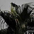 And A Crow Oh Oh In A Palm Tree by Jay Milo