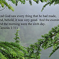 And God Saw by Tikvah's Hope