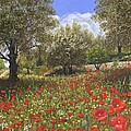 Andalucian Poppies by Richard Harpum