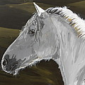 Andalusian Foal by Janina  Suuronen