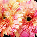 Andee Design Gerber Daisies 2 by Andee Design
