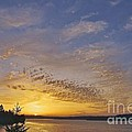 Anderson Island Sunset by Sean Griffin