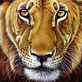 Andre Lion by Jurek Zamoyski