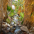 Andreas Creek In Andreas Canyon In Indian Canyons-ca by Ruth Hager
