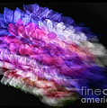 Anemone Abstract by Claudia Kuhn