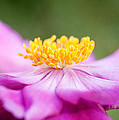Anemone Flower Close Up by Natalie Kinnear