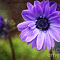 Anemone Kissed by Sharon Talson