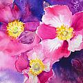 Anemones by Ruth Harris
