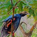 Angel Bird Of  North Moluccas by Jason Sentuf