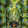 Angel Eyes by Mandie Manzano