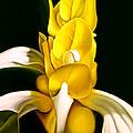 Angel Flower by Anni Adkins