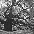 Angel Oak II - Black And White by Suzanne Gaff