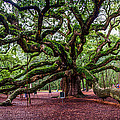 Angel Oak by Jeff Ortakales