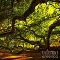 Angel Oak Limbs Crop 40 by Susanne Van Hulst