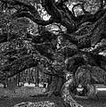 Angel Oak Tree 2 by Kathleen Struckle