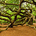 Angel Oak Tree Branches by Louis Dallara