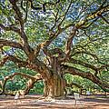 Angel Oak Tree In Charleston Sc by Pierre Leclerc Photography