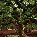 Angel Oak Tree by Kathleen Struckle