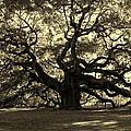 Angel Oak Tree Sepia by Susanne Van Hulst