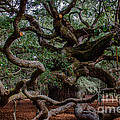 Angel Oak Tree Treasure by Dale Powell