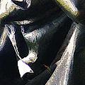 Angel Of Death by Linda Shafer