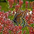 Angel Of The Wildflowers by Brian Graybill