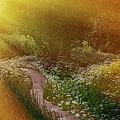 Angel Rays. Follow The Sun by Jenny Rainbow