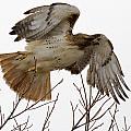 Angel Wings by Eric Mace