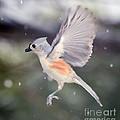 Angel Wings by Kerri Farley