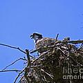 Angry Bird by Joe Geraci