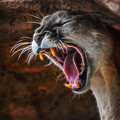 Angry Cougar by Ernie Echols