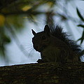Angry Squirrel by Johnny Mcdonald