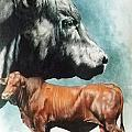 Angus Cattle by Barbara Keith