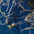 Anhinga Everglades by Manuel Lopez