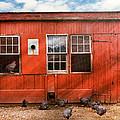 Animal - Bird - Bird Watching by Mike Savad