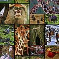 Animal Collage by Blake Richards