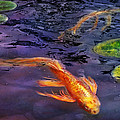 Animal - Fish - There's Something About Koi  by Mike Savad