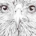 Animal Kingdom Series - Bird Of Prey by Bobbie S Richardson
