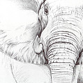 Animal Kingdom Series - Gentle Giant by Bobbie S Richardson