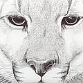 Animal Kingdom Series - Mountain Lion by Bobbie S Richardson