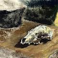 Animal Skll by Geoffrey Haun