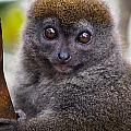 Animals 22 by Ben Yassa