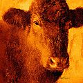 animals- cows- Brown Cow by Ann Powell