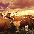 animals - cows- Longhorns La Familia  by Ann Powell