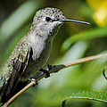 Anna Hummingbird by Michael Moriarty