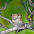 Annas Hummingbird Nest by Anthony Mercieca