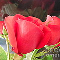 Anniversary Roses With Love 2 by Paddy Shaffer