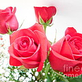 Anniversary Roses With Love 3 by Paddy Shaffer