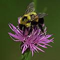 Another Bee? by Jeff Klahn